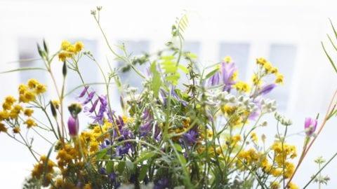 Odla.nu blomsterfröer